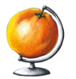 Illustration: Grapefruit Globe