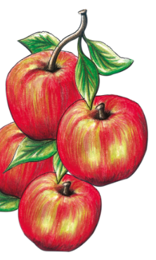 Illustration: Apples