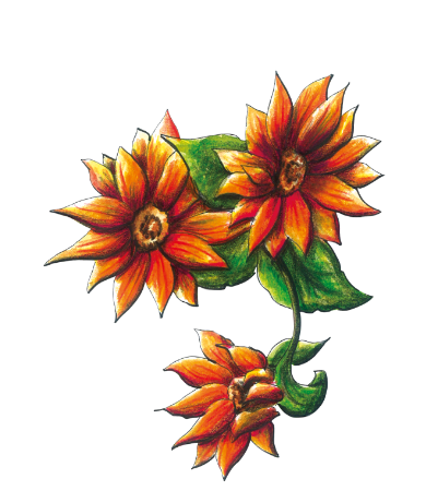 Illustration: Orange Flowers